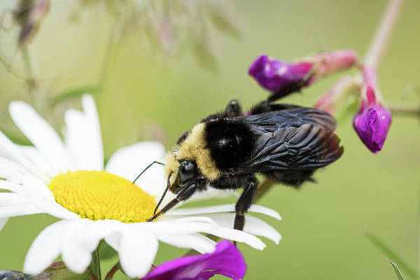 Photograph - Bumble Bee Fuel Stop by Robert Potts