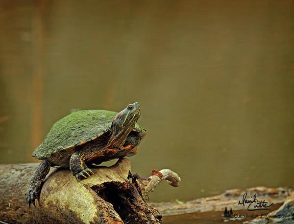 Photograph - Bump On A Log by David Cutts