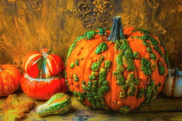 Wall Art - Photograph - Bumpy Knuckle Head Pumpkin by Garry Gay