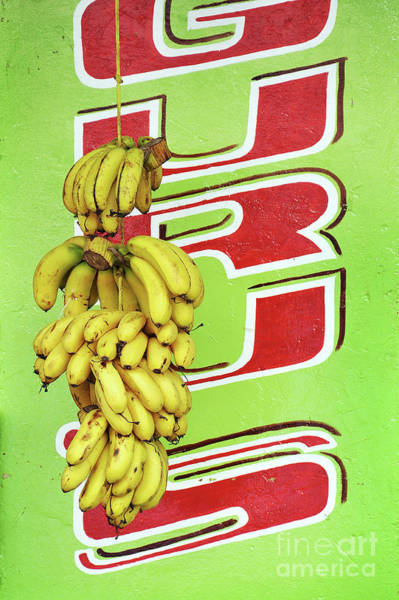 Wall Art - Photograph - Bunch Of Bananas And Green Wall by Delphimages Photo Creations