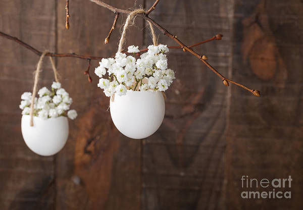 Egg Shell Photograph - Bunch Of Of White Babys Breath Flowers by Nella