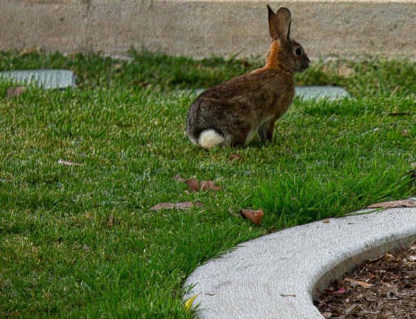 Photograph - Bunny In Park by Maria Reverberi