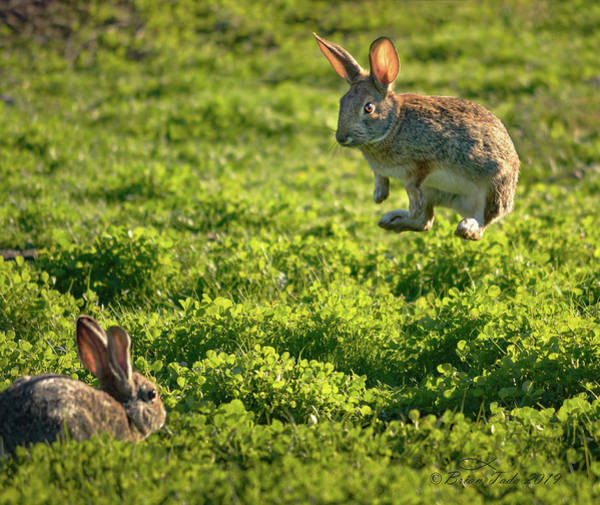 Photograph - Airborne Bunny by Brian Tada