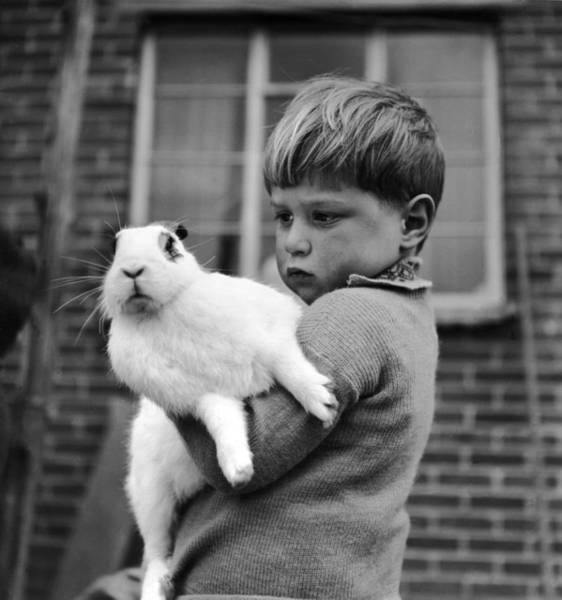 Suburbs Photograph - Bunny Love by Haywood Magee/charles Hewitt