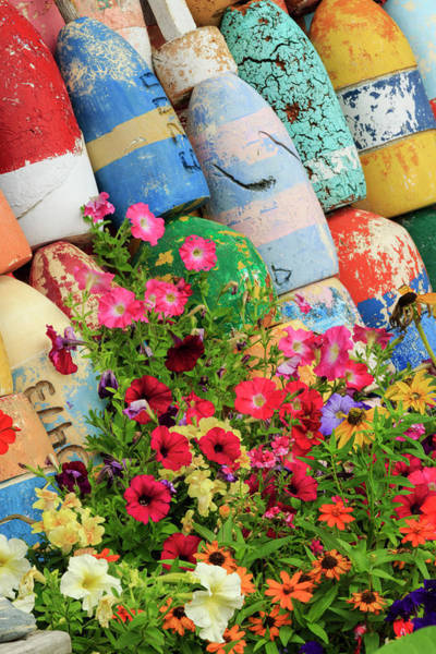 Buoys And Petunia Flowers, Rockport Art Print by Adam Jones
