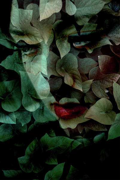 Photograph - Buried Beneath The Leaves by A.l. Canterbury
