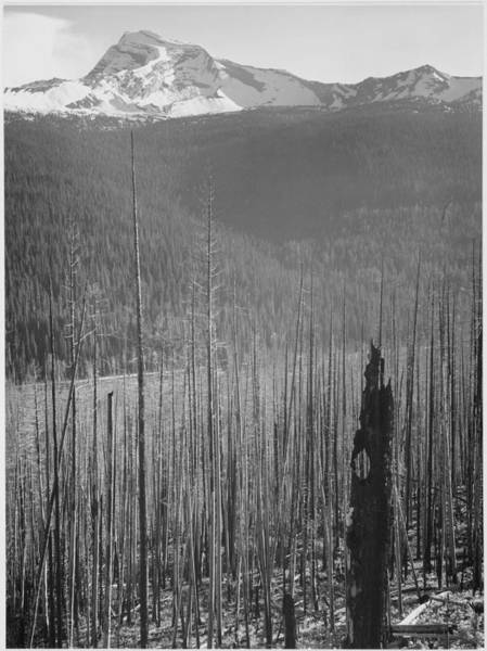 Photograph - Burned Area Glacier National Park by Buyenlarge