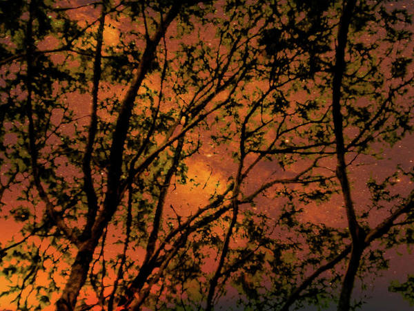 Mixed Media - Burning Tree by AE collections