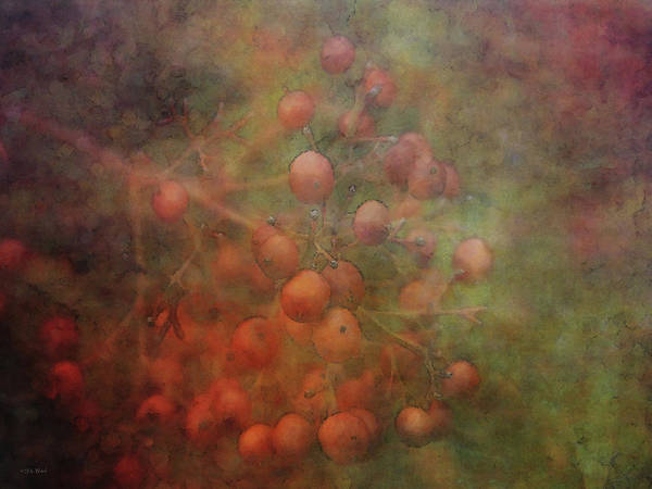 Photograph - Burnished Berries 5615 Idp_2 by Steven Ward