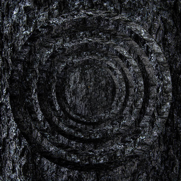 Wall Art - Photograph - Burnt Bark Circles by Pelo Blanco Photo