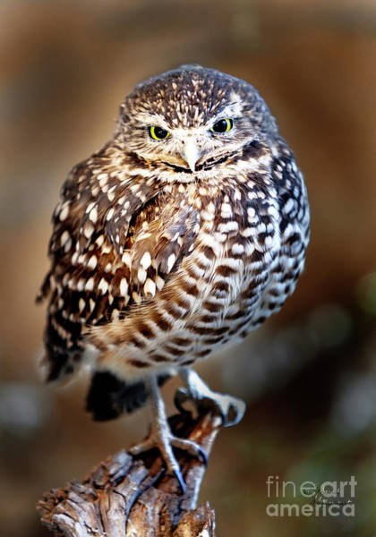 Photograph - Burrowing Owl Canvas Print,photographic Print,art Print,framed Print,greeting Card,iphone Case, by David Millenheft