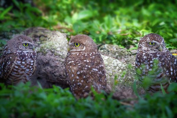 Wall Art - Photograph - Burrowing Owl Family by Mark Andrew Thomas