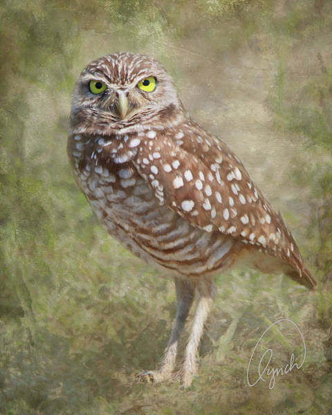 Photograph - Burrowing Owl by Karen Lynch