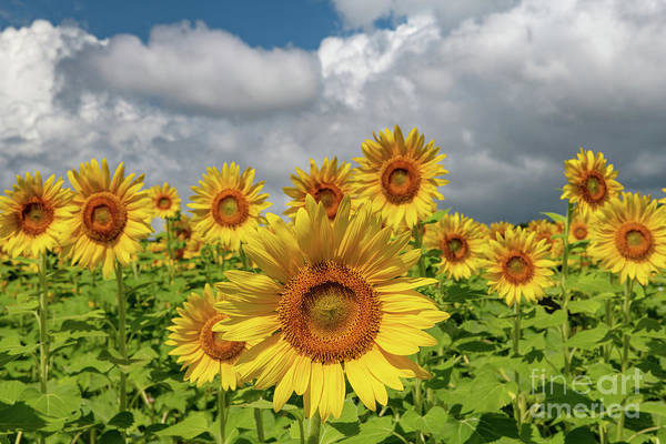 Photograph - Bursting Forth Sunshine by Dale Powell