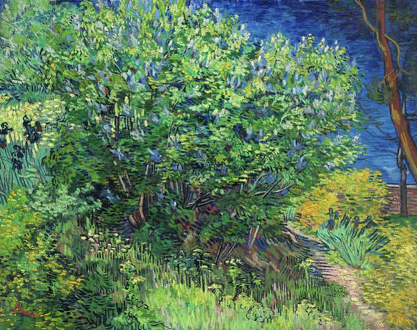 Potato Painting - Bush, 1889 by Vincent Van Gogh