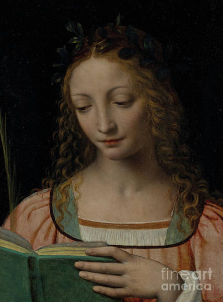 Wall Art - Painting - Bust Length Figure Of Saint, With A Palm And Reading The Scriptures by Bernardino Luini