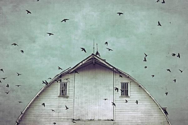 Barnyard Photograph - Busy Barn by Julie Hamilton