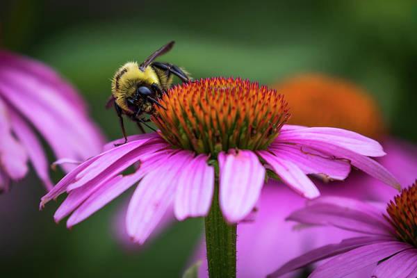 Photograph - Busy Bee by Allin Sorenson
