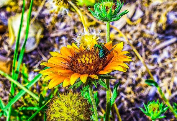 Photograph - Busy Bee by Jeremy Guerin