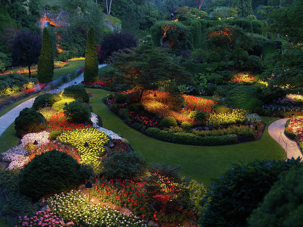 Ornamental Grass Photograph - Butchart Gardens At Night by Win-initiative