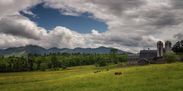Photograph - Buttercup Farm by Darylann Leonard Photography