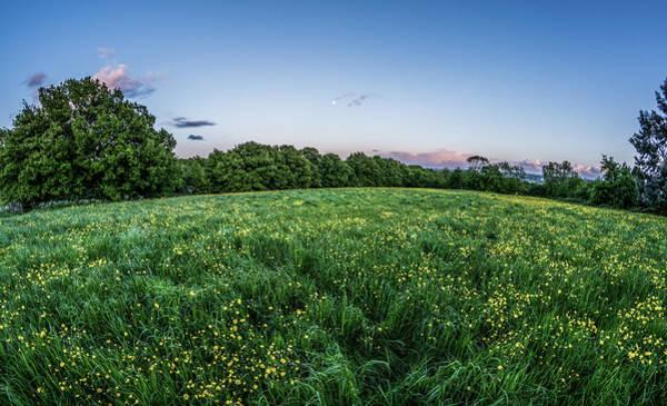 Rawdon Photograph - Buttercups, Yorkshire by Darren Sanderson