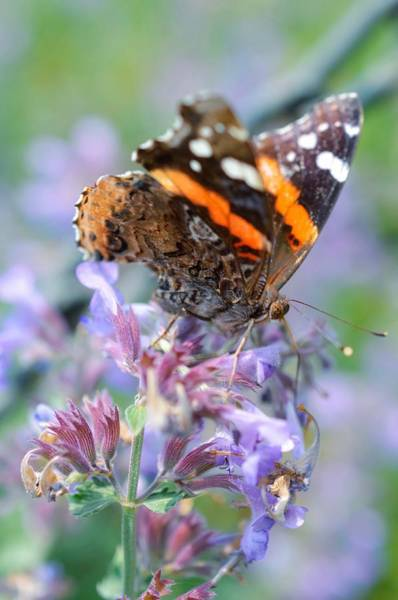 Photograph - Butterflies Are Free by Shannon Kelly