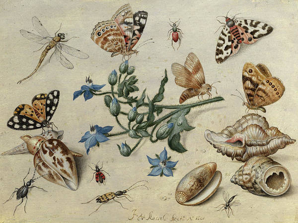 Wall Art - Photograph - Butterflies, Clams, Insects by Jan van Kessel the Elder