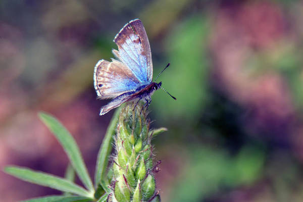 Photograph - Butterfly 5608-030519  by Tam Ryan