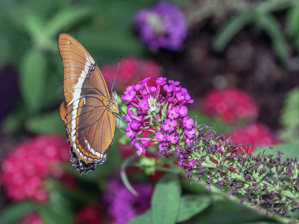 Photograph - Butterfly 8516-042619 by Tam Ryan