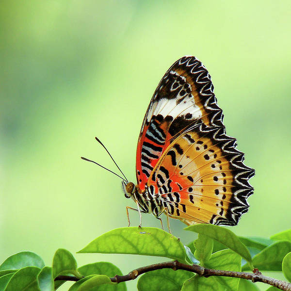 Wall Art - Photograph - Butterfly by Adegsm