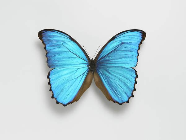 Butterfly Art Print by Adrian Burke
