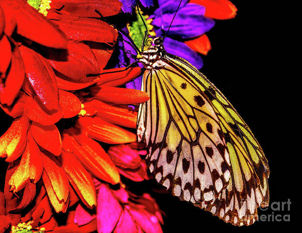 Photograph - Butterfly And Colorful Flowers by Nick Zelinsky