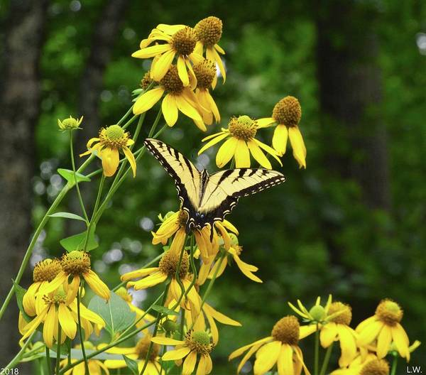 Photograph - Butterfly And Flowers by Lisa Wooten