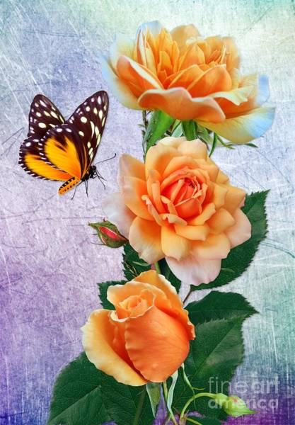 Digital Art - Butterfly And Orange Rosess by Morag Bates