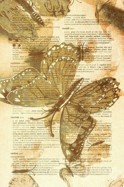 Wall Art - Photograph - Butterfly Antiquities by Jorgo Photography - Wall Art Gallery