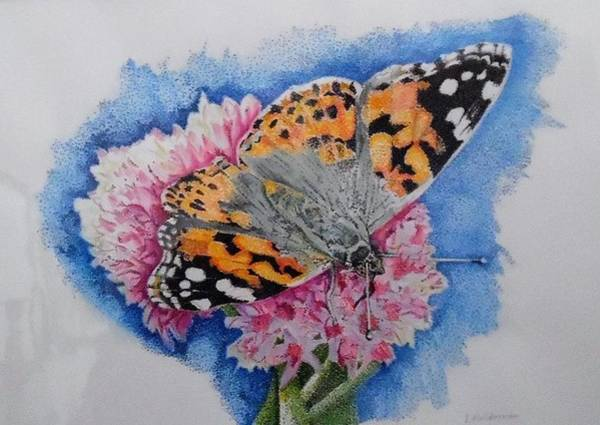 Wall Art - Drawing - Butterfly At Lunch by ILona Halderman