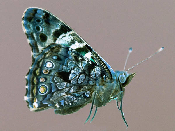 Insect Photograph - Butterfly by Aurora Rodriguez