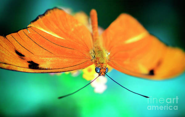 Photograph - Butterfly Blue Eyes by John Rizzuto