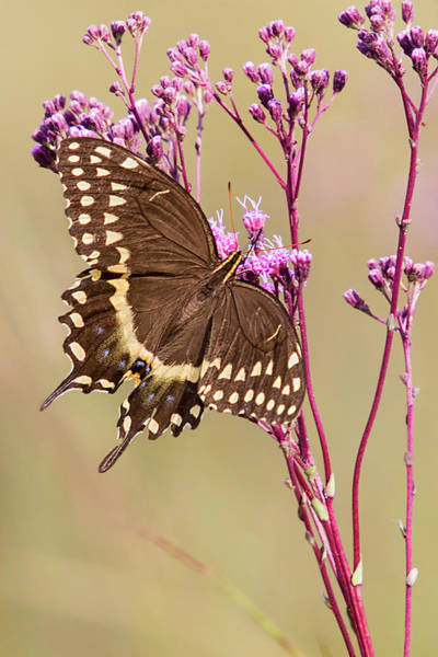 Photograph - Butterfly by Bob Decker