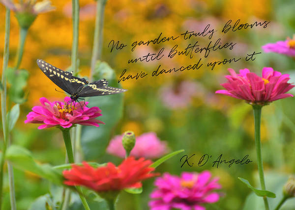 Photograph - Butterfly Bow Tie Quote by Jamart Photography