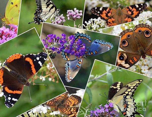 Wall Art - Photograph - Butterfly Collage by Cindy Treger
