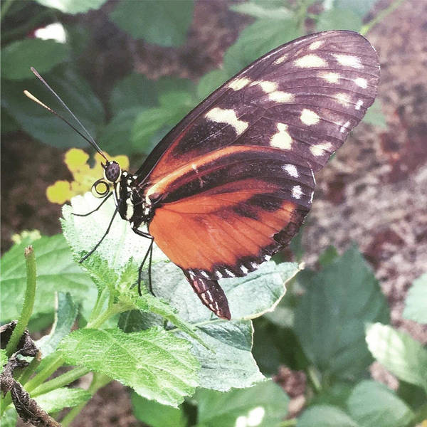 Photograph - Butterfly Daze by Christine Chin-Fook