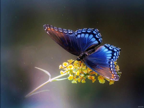 Wall Art - Photograph - Butterfly Dreams by Marilyn De Block