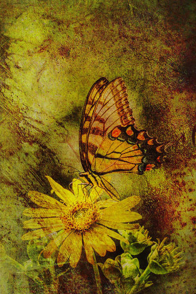 Mixed Media - Butterfly Effect by Keith Smith