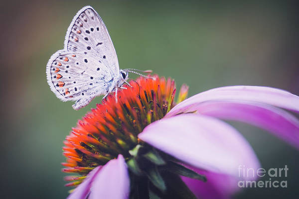 Wall Art - Photograph - Butterfly, Flower, Colorful, Nature by Murgvi