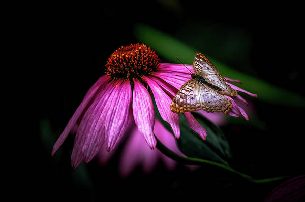 Wall Art - Photograph - Butterfly Flowers by Athena Mckinzie