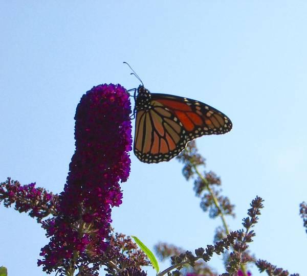 Wall Art - Photograph - Butterfly Garden by Juli Kreutner