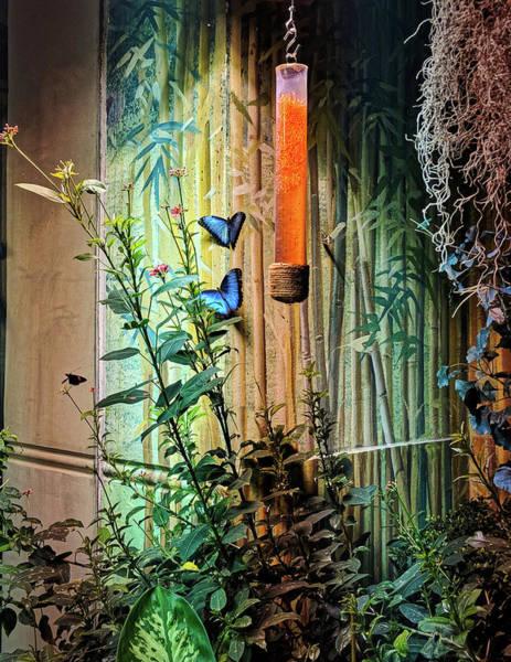 Photograph - Butterfly Garden by Portia Olaughlin