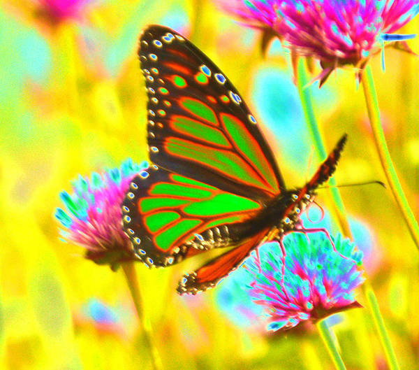 Photograph - Butterfly Green  by Tom Kelly